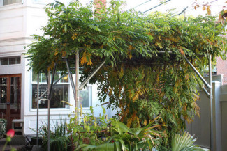 How to Build a Wisteria Support Trellis and Pergola - Great Idea, Design and Pictures